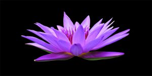 Peacezful zen warriror